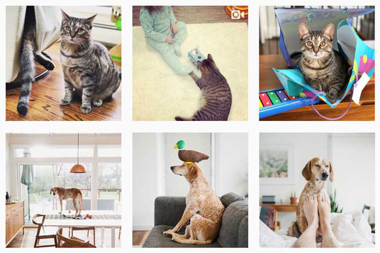 Instagram Pets Worth a Second Glance